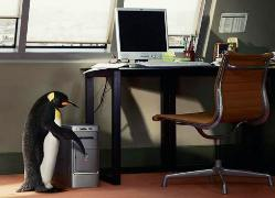 penguin_office